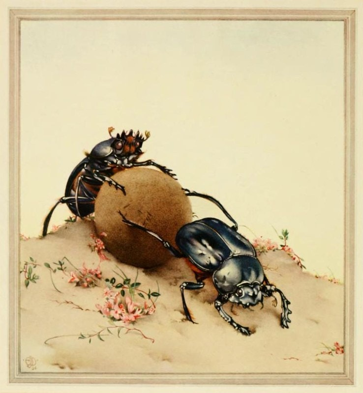 Sacred Beetle illustration E. J. Detmold